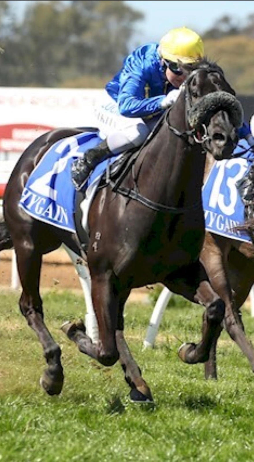 Shinseki Salutes At Leeton!