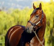 Quality horses for Gold Coast Sale