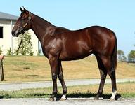 JWR SECURE FIRST EVER NORTHERN METEOR COLT