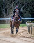 FRENCH MARE LOOKING FOR FIRST OZ WIN