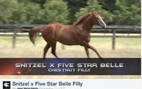 VIDEO: SNIZTEL YEARLING