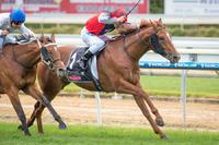 THE BARRISTER TO CHASE BLACK TYPE
