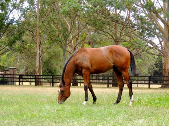 BIG PEDIGREE UPDATES FOR JWR YEARLINGS