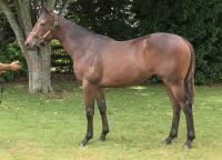 KIWI FILLY MAKES AUSTRALIAN DEBUT