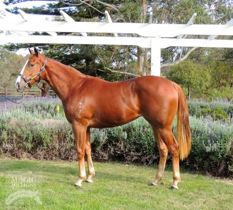 SNITZEL FILLY - ONCE IN A LIFETIME OPPORTUNITY