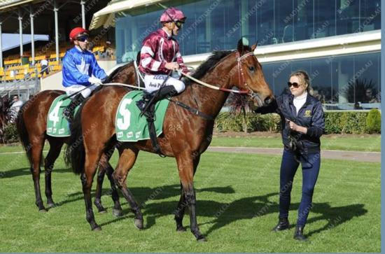 TIMELY PEDIGREE UPDATE FOR RELIABLE MAN COLT