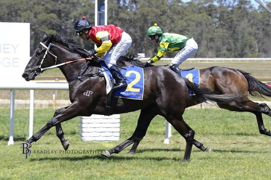 3 Year Old Dark Dream Wins Debut Run at Moruya