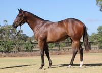 Lot 304 Holy Roman Emperor x Cannolina Yearling Secured at Inglis Classic Sales 2018