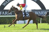 Second Win in a Row for Stayer Red Dream
