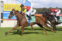 Red Dream Wins at Nowra