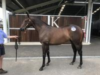 Headwater x Real Pleasure Filly Joins the Team
