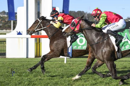 Tenorino Secures Another Win on Home Turf at Kembla Grange