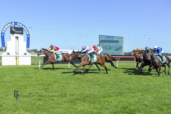 Don Luigi Locks Down His Maiden Win at Kembla Grange