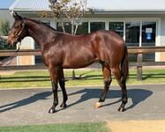 Smart Missile x Leelinchin Yearling Colt Available