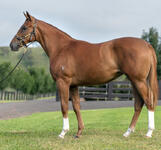 Star Turn x Ruling Queen yearling filly