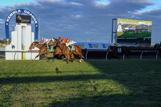 Tampering Wins First Up at Kembla Grange to Notch Up His 4th Win