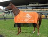 Cedarberg's Ansett Stakes win