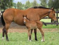 Arapaho Miss 1st foal