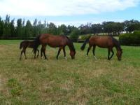 Visit to Wyadup Valley Farm Dec 2010