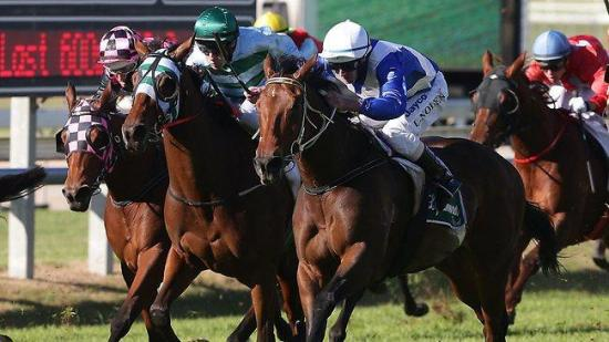 Trainer Pat Carey backs Gondokoro over Dear Demi in Queensland Oaks