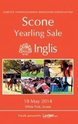 Scone Yearling Sale - our Lucky Last!
