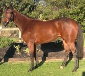 Equiano/AnnaDanna filly's half brother, packs another punch!