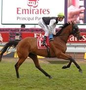 Utility - VRC Emirates Airlines Hcp 2000m - (Melb. Cup Week).jpg