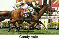 Candy Vale - MVRC Sunline Stakes 1600m.jpg