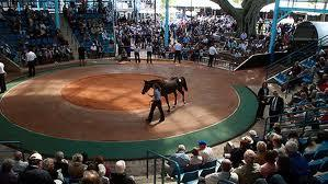 Sydney Yearling Sales