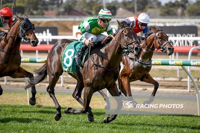 Patrick Carey Racing - Australian Horse Trainer