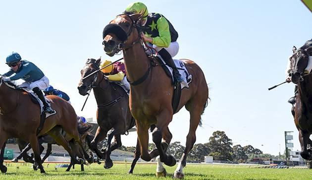 Carey eyes Yarra Valley Cup with Maclairey