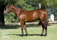 Magic Millions buy - Targeted at the 2yo Magic Millions!