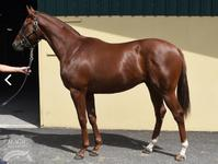 Stable secures 3/4 brother to Lasqueti Spirit