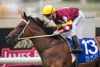 Meryl's star to shine in breeding barn