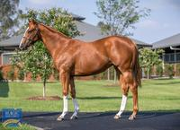 Stable two year olds star at Randwick trials