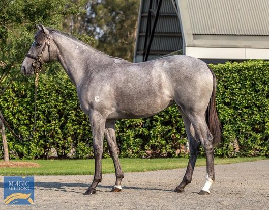 Six in total from Magic Millions