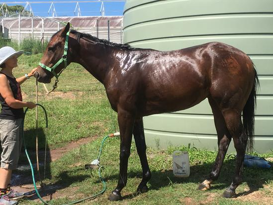 LEASE - Direct Charge Filly