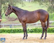 Great start for stable at Magic Millions