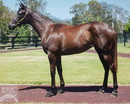 More Than Ready X Golden Falls Filly