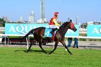Dwarf Wins At Gold Coast
