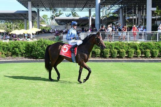 Highland Skipper's Win at The Gold Coast And Again At The Sunshine Coast