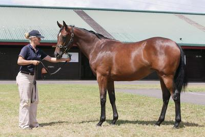 Yearling Update - POUR MOI Filly