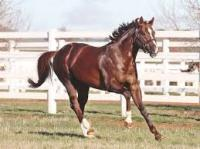 Stallion of the moment - Written Tycoon