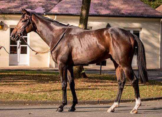 Young French stayer Darabad joins our stable