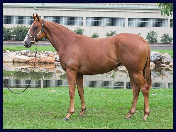 2017 Inglis Easter Yearling Sale - Lot 151 Snitzel x Gallant Tess