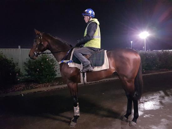 Ready to Run 2YO by Written Tycoon