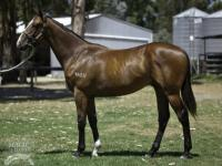 For Sale: Vital Equine / Indian Angel yearling