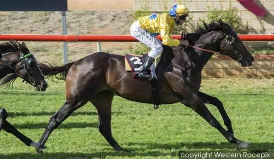 TRADESMAN GETS THE JOB DONE ON DEBUT