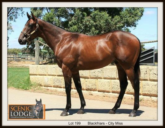 BLACKFRIARS YEARLING AVAILABLE