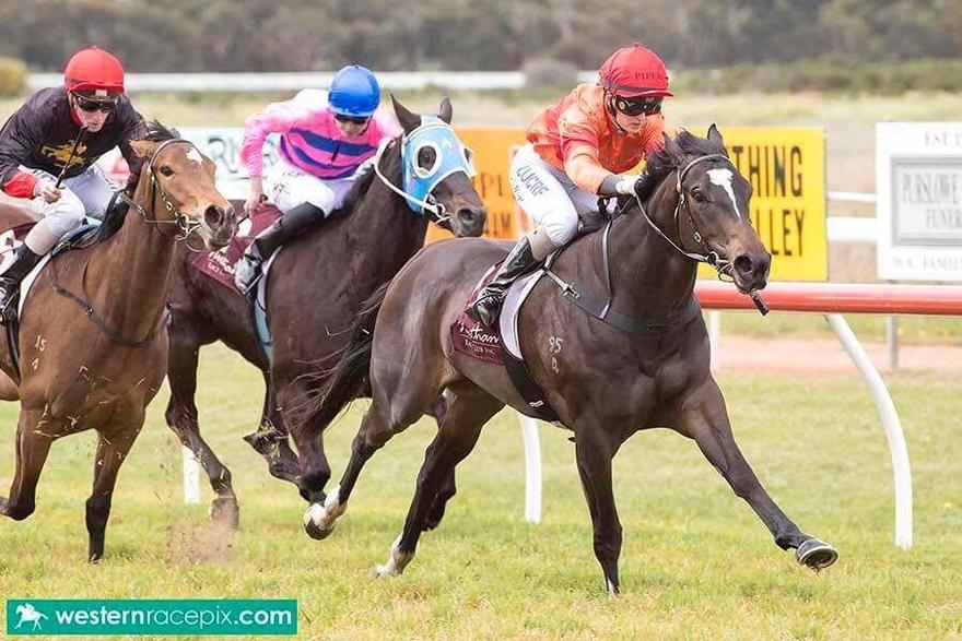 MISTY METAL LOOKING FOR SECOND WIN